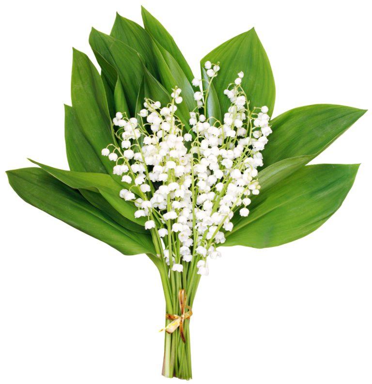 цветы которые можно подарить девушке