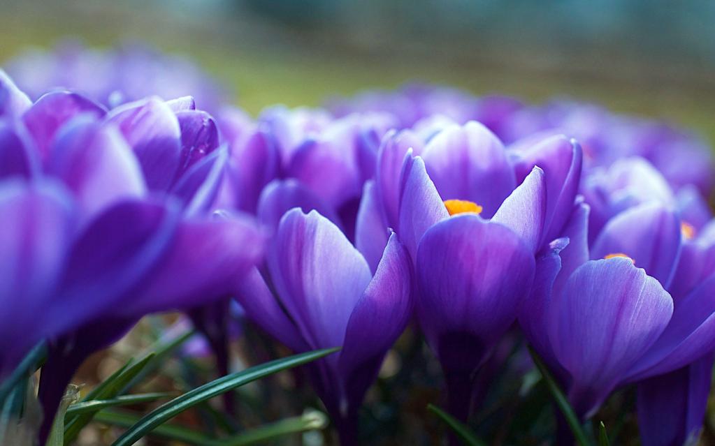 какие цветы можно подарить