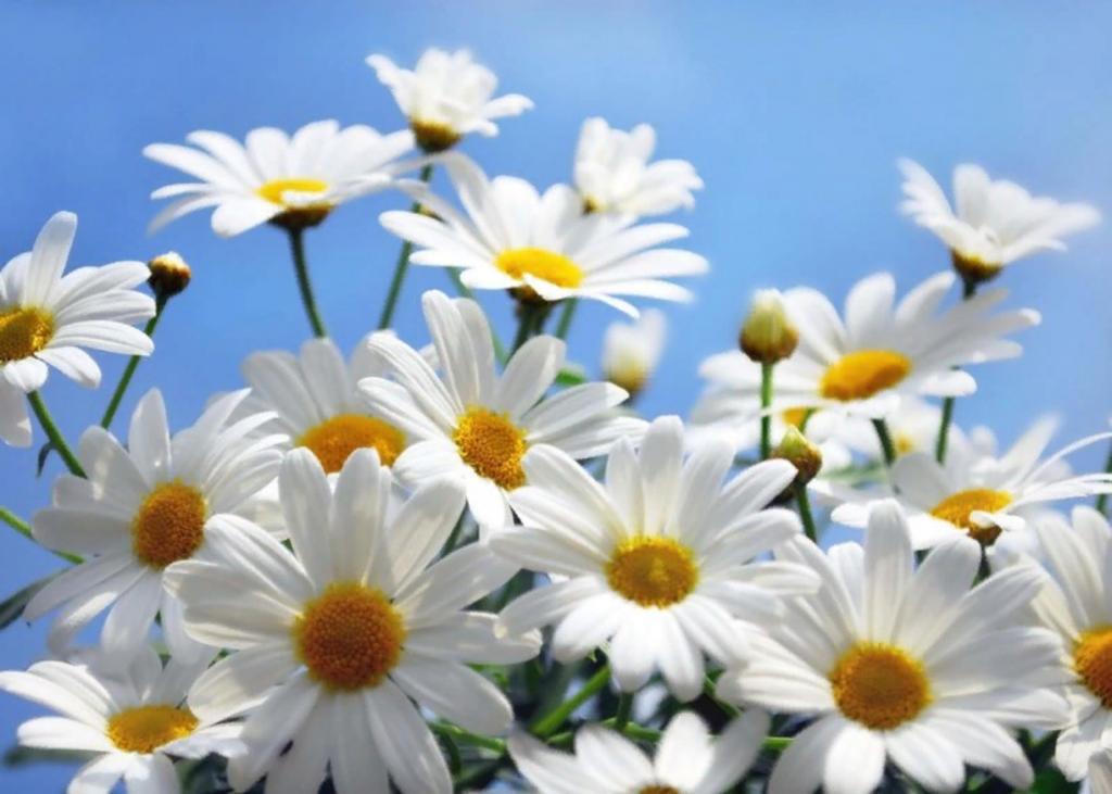 какие цветы дарят женщинам