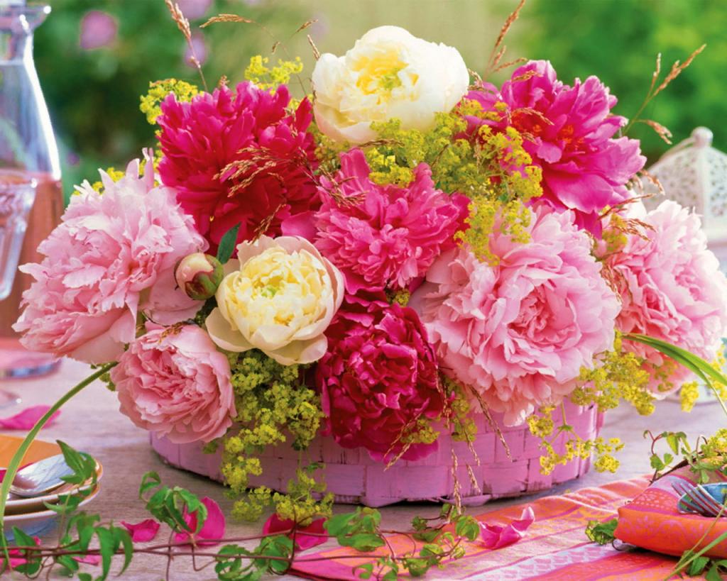 какие цветы купить девушке