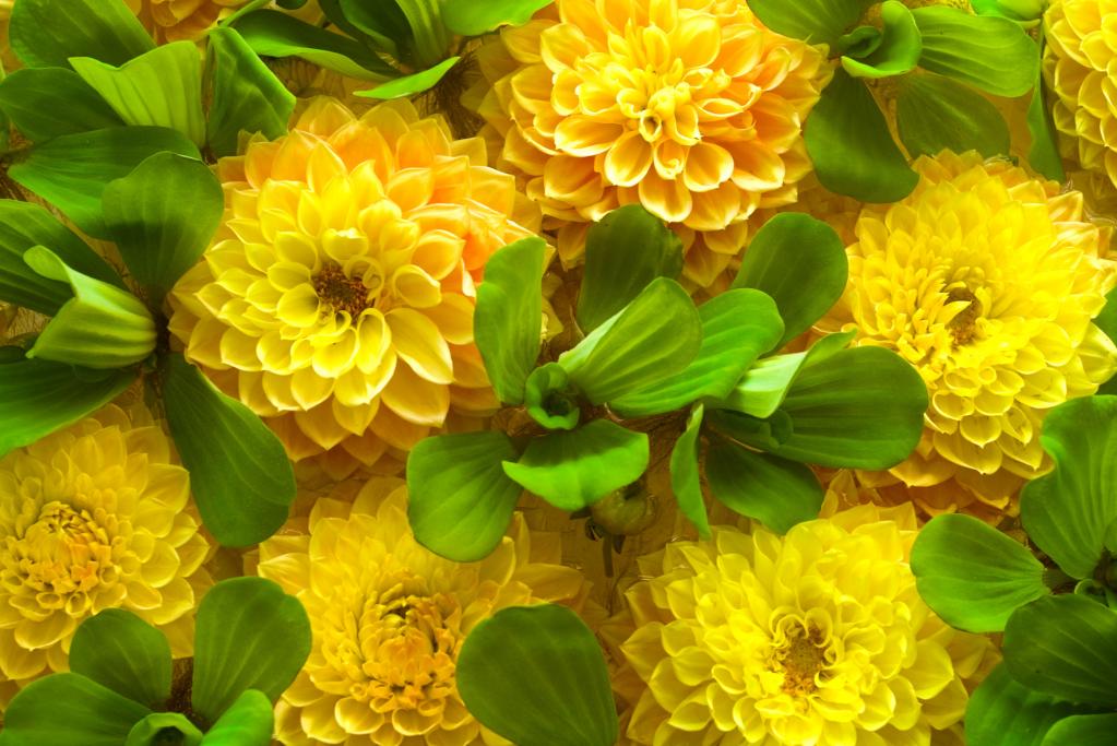 какие цветы лучше дарить девушке